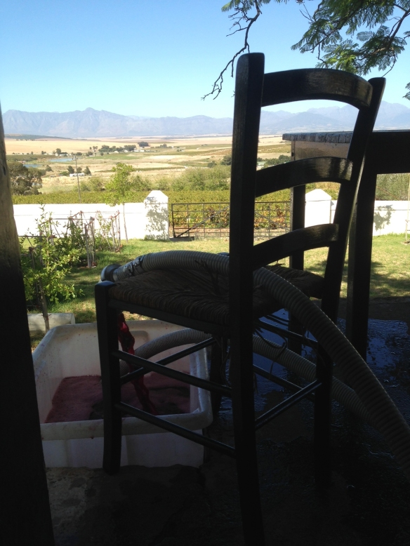 Swartland Pinotage with a view